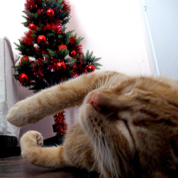 Primeros auxilios en gatos - gato electrocutado