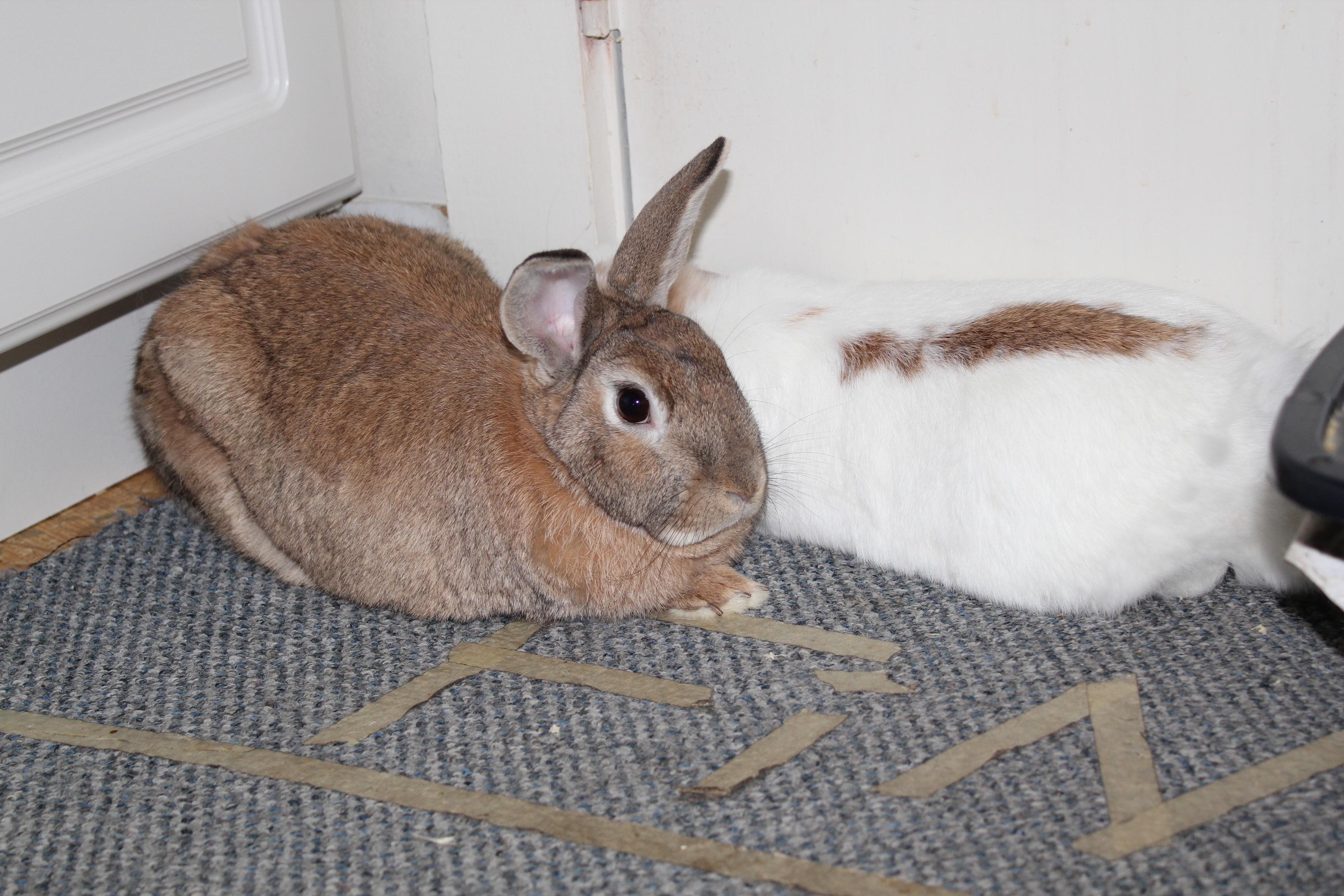 cómo cuidar un conejo