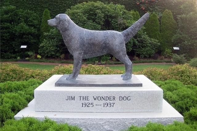 Jim the wonder dog